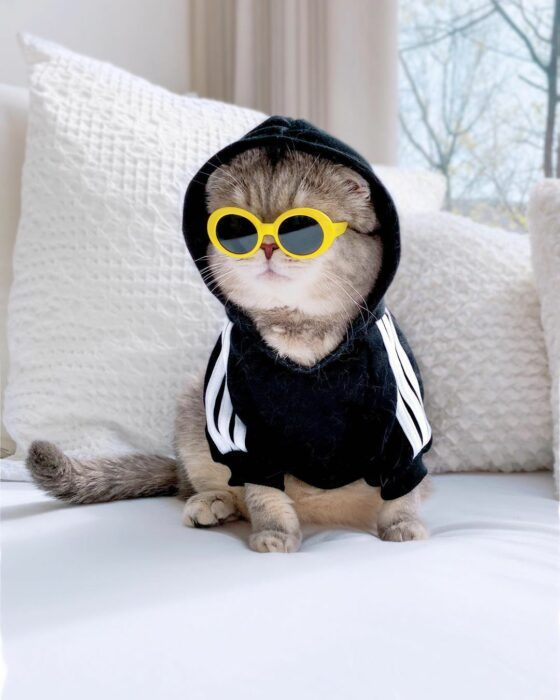 Benson, el felino a la moda; gato gris con rayas negras vestido con lentes de sol con armazón amarillo y sudadera negra con líneas blancas