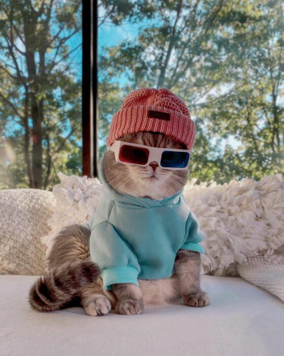 Benson, el felino a la moda; gato gris con rayas negras vestido con gorra roja, lentes de tercera dimensión, cuadrados rojo y azul, sudadera azul cielo