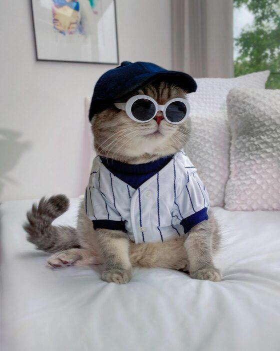 Benson, el felino a la moda; gato gris con rayas negras vestido con gorra y sudadera de beisbolista, lentes de sol redondos con armazón blanco