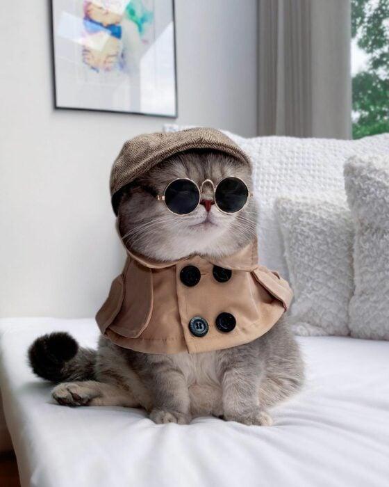 Benson, el felino a la moda; gato gris con rayas negras vestido con boina bohemia, chaleco, lentes de sol redondos, Sherlock Holmes