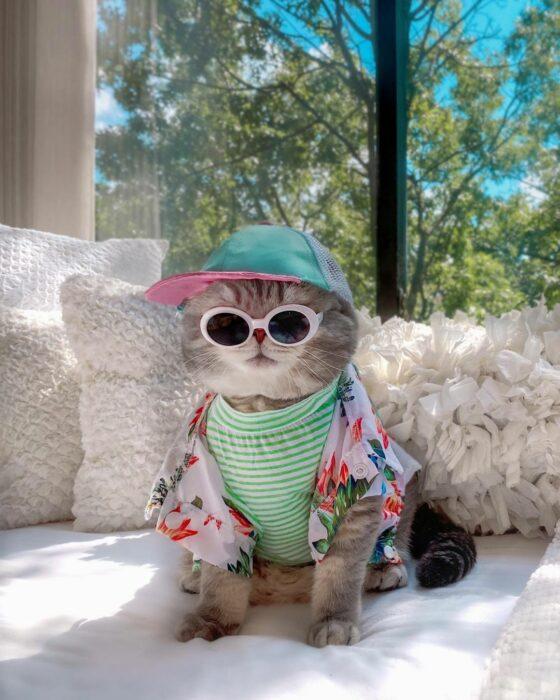 Benson, el felino a la moda; gato gris con rayas negras vestido con cachucha verde menta con rosa, blusa rayada y camisa de flores hawaiana, lentes de sol redondos con armazón blanco