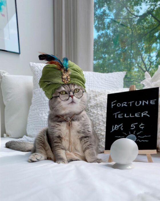 Benson, el felino a la moda; gato gris con rayas negras vestido con turbante de adivino, lentes de aumento redondos, cadena dorada