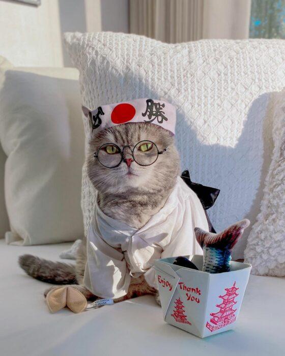 Benson, el felino a la moda; gato gris con rayas negras vestido con ropa japonesa, lentes de aumento redondos