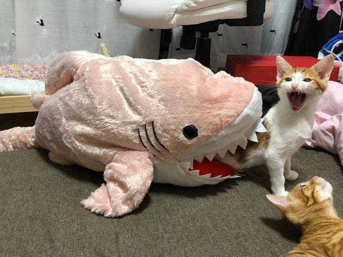 Gatos dramáticos