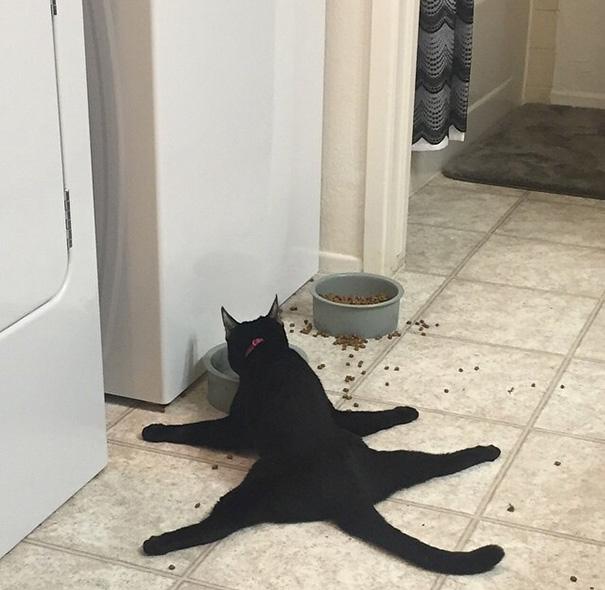 Gato negro comiendo con las cuatro patas abiertas en el piso
