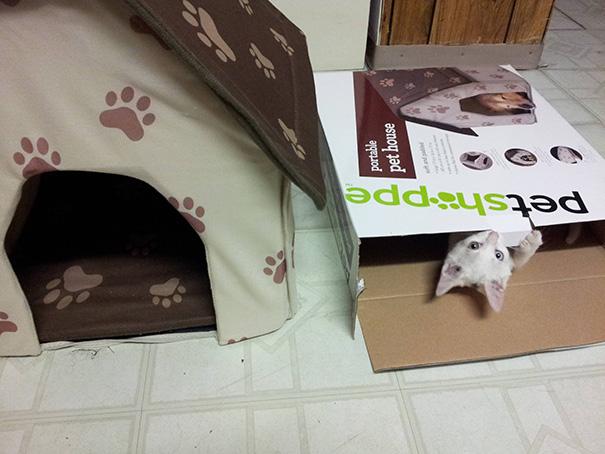 Gatito blanco asomándose de una caja blanca y al lado una casita para gatos beige con café y huellitas cafés claro