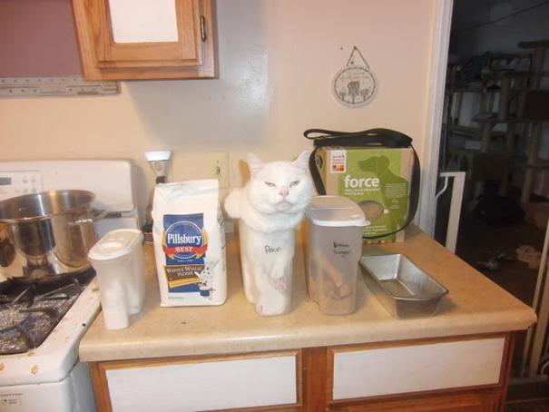 Gato blanco metido en un recipiente de plástico para harina