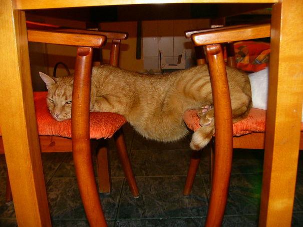 Gato naranja acostado entre dos sillas con la panza al aire
