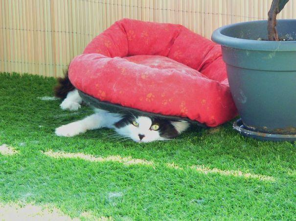 Gato negro con blanco acostado abajo de su cama roja en el jardín
