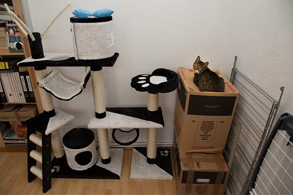 Gato café con machas negras acostado en una caja grande cartón al lado de una estructura para gatos blanco con negro