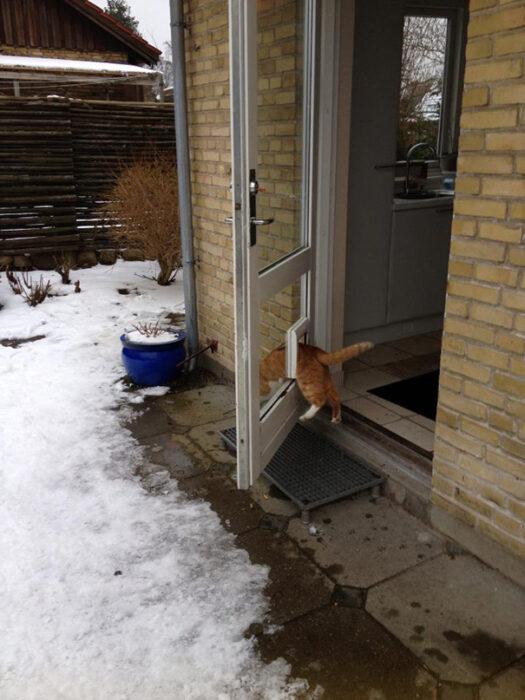 Gato gordo y naranja atorado en una puerta blanca con vidrio