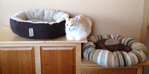 Gato blanco acostado en mueble de madera en medio de dos camas para gatos