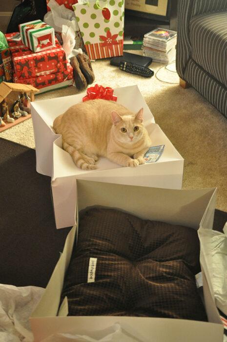 Gato naranja claro acostado sobre caja blanca y al lado un colchón café para gatos