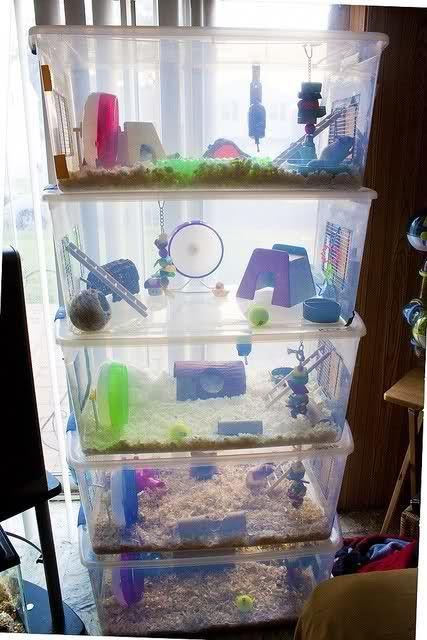 Casitas para hámsters hechas con cajas de plástico una encima de la otra decoradas con juguetitos de colores