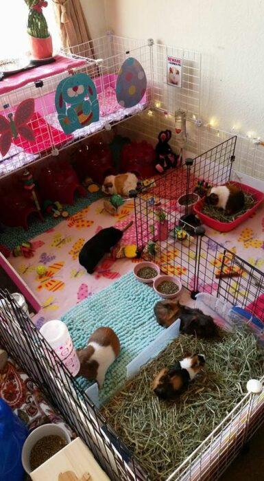 Jaulita para cuyos hecha con rejas negras tapizada con cobija rosa con flores, toalla verde, y contenedores para beber agua y comer