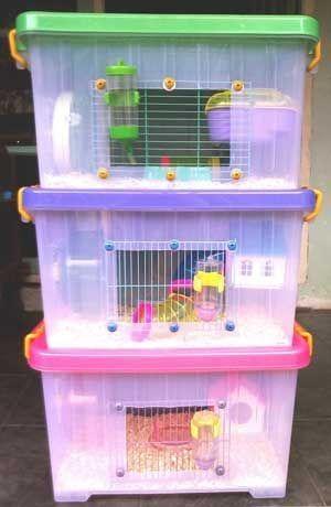 Terrarios para hámster hechos con cajas de plástico transparentes y rejas blancas acondicionadas con aserrín y juguetitos de colores