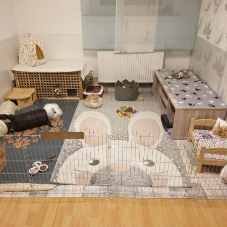 Casitas para cuyo o conejo hecha con rejas negras y tapizada con alfombrita de video de conejo y acondicionada con camitas y recipientes para comer