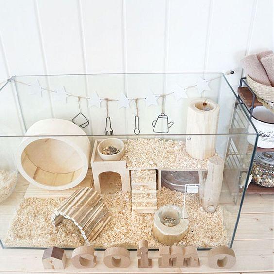 Jaulita para hámster, cuyos o erizo hecha con paredes de cristal y acondicionada con rueda, y dos plantas construidas con madera y mucho aserrín