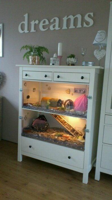 Terrario para para hámster o cuyo hecho en un mueble blanco con paredes de vidrio acondicionado con aserrín y con dos plantas y una escalera de madera