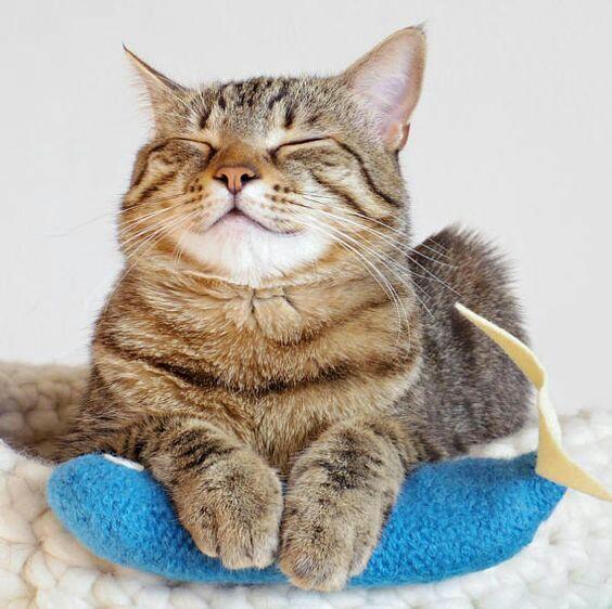 Gatito beige con rayas cafés acostado en una cama con los ojos cerrados