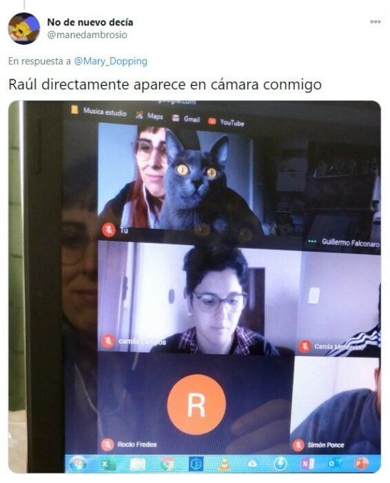 Gatito en plena clase virtual