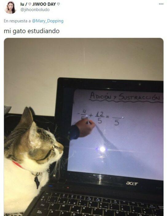 Gatito aprendiendo calculo de manera virtual