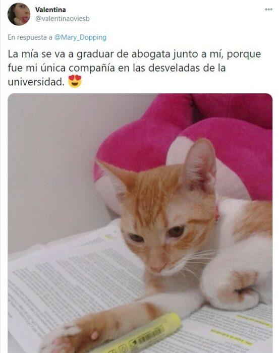 Gatito recostado sobre un libro de texto