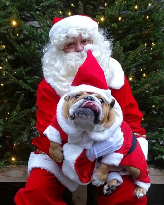 Perrito bull dog disfrazado de Santa Claus