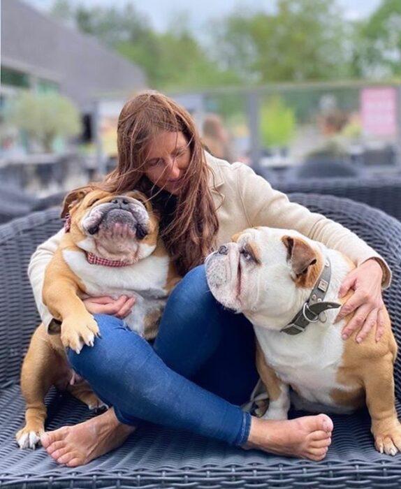 Perritos bull dog sentados en un sofá