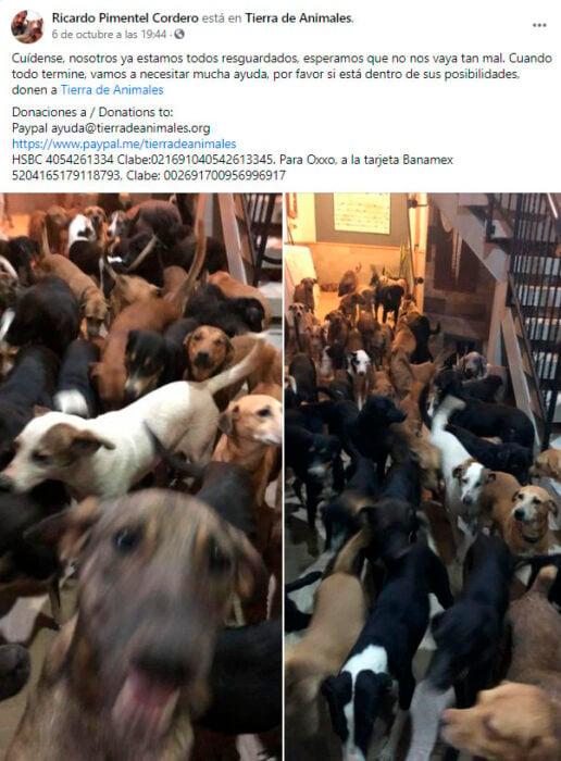 Publicación en Fb de Ricardo Pimentel después de haber rescatado a 300 animales durante el huracán Delta