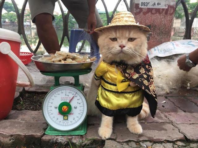 Gatito Chó con sombrerito y traje amarillo junto a una báscula de comida