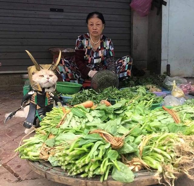 Gtito Dog con difraz de Loki al lado de un puesto de verduras