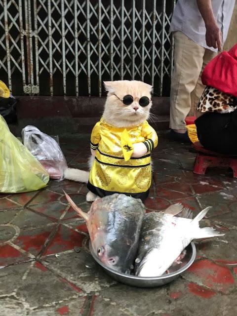 Gatito Chó con traje amarillo y lentes de sol redondos junto a puesto de pescado