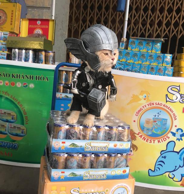 Gatito Chó con disfraz de Thor encima de una torre de refrescos de lata
