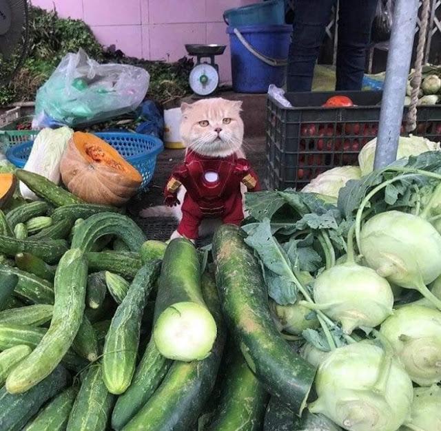 Gatito Chó con disfraz de Iron man junto a puesto de vegatales