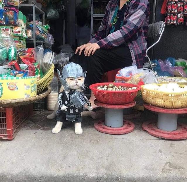 Gatito Chó con disfraz de Thor junto a canastas de comida en el marcado