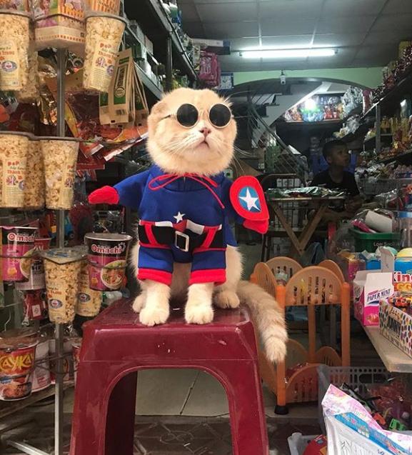 Gatito Chó con disfraz de capitán américa y lentes de sol redondos arriba de un banco rojo