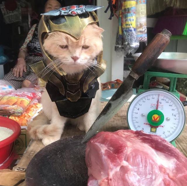 Gatito Chó con disfraz de Thanos junto a un puesto de carne en el mercado