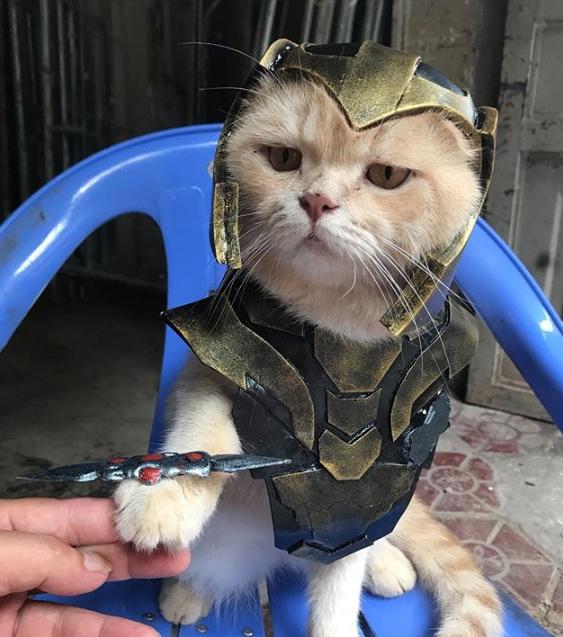 Gatito Chó con disfraz de Loki sentado en silla azul