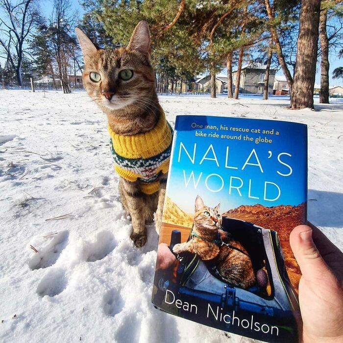 Mano de hombre sostiene un libro mientras un gato café con suéter amarillo está sentado atrás en la nieve