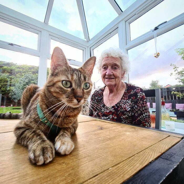 Gato café de ojos verdes acostado en una mesa de madera mientras anciana lo mira