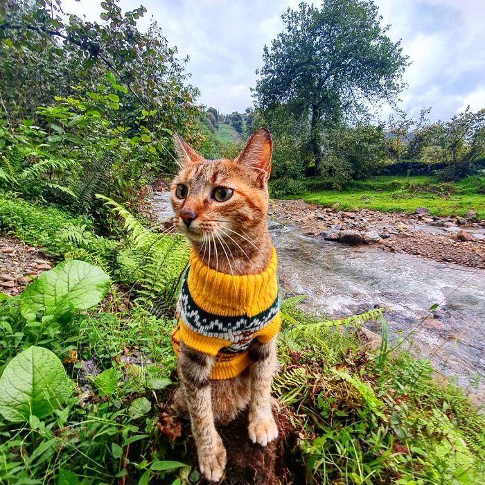 Gato café con rayas negras usando un suéter amarillo mientras está sentado en el pasto junto a un río