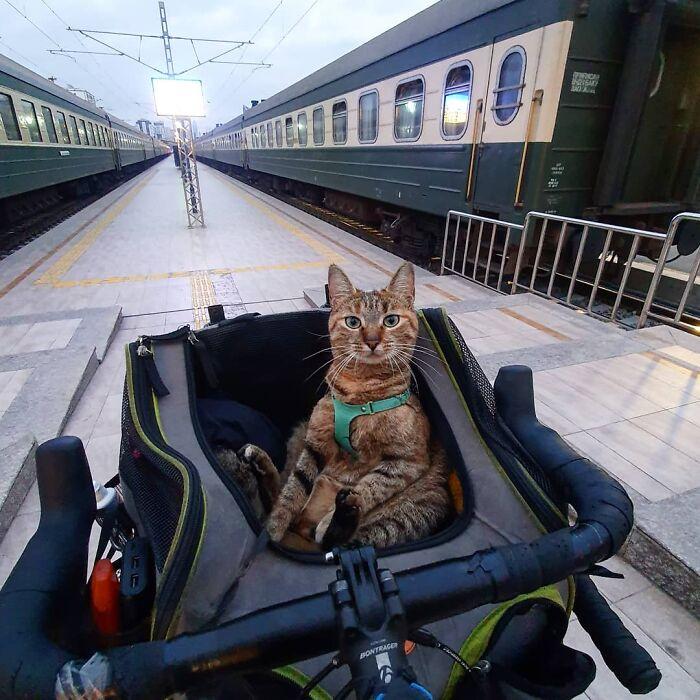 Gato café con rayas negras sentado dentro de una maleta de ruedas en la estación de un metro