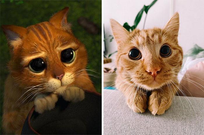 Poe Poe, gatito naranja imitando a personaje animado; ; Minino imita a el gato con botas y derrite a internet con su ternura