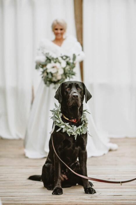 Perrito Labrador color negro parado frente a su dueña el día de su boda