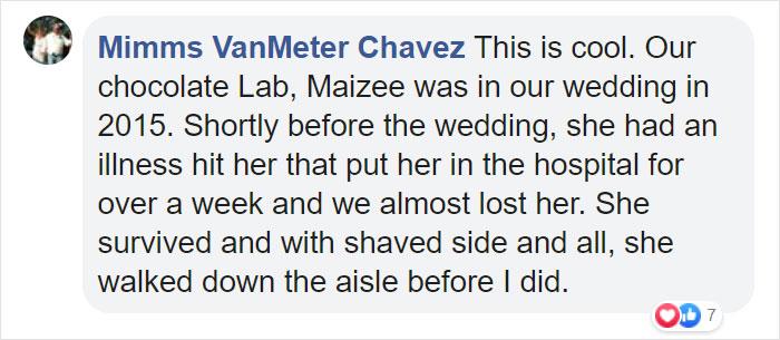 Comentarios en facebook sobre perrito que participó en una sesión de boda con su dueña