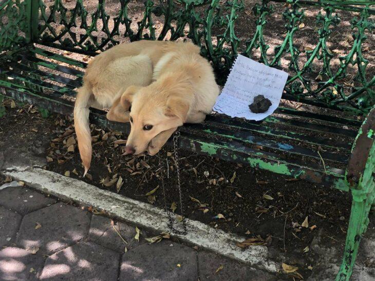 Perro color beige acostado arriba de una banca verde con una nota encima