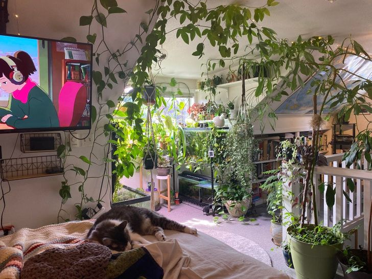 Habitación blanca con una cama con un gato acostado y plantas colgantes y macetas en el piso
