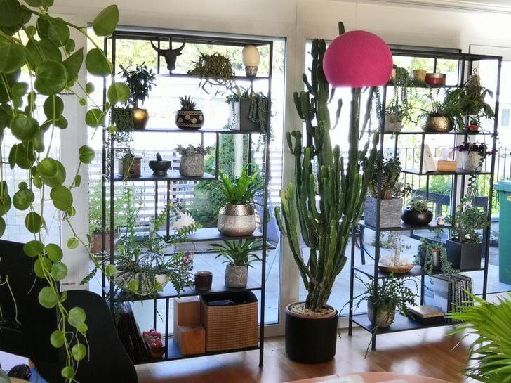 Repisas llenas de plantas en habitación con muros de cristal y en medio un cactus grande