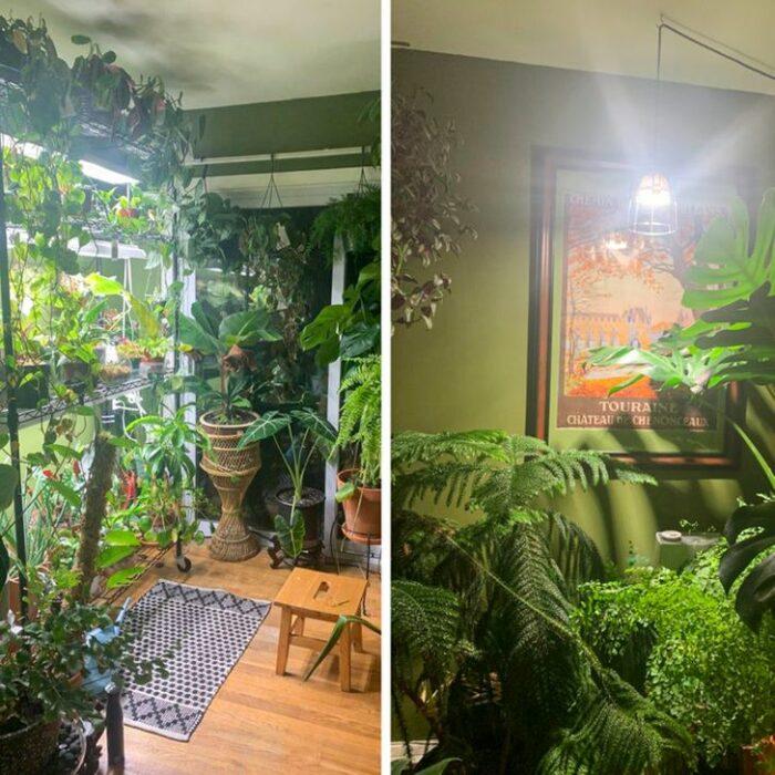 Habitación verde con piso de madera decorada con muchas plantas